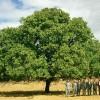 ceviz ağacı yetiştirme